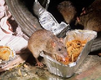 krysy na svalke